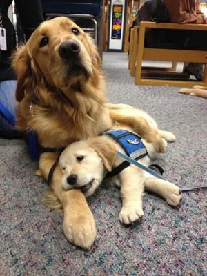 青いベストを着た大きな犬と小さな犬が絨毯の上で横になっている姿