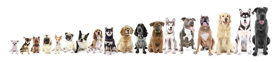 小型犬や大型犬