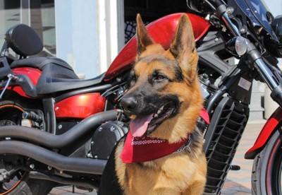 赤いバイクと犬