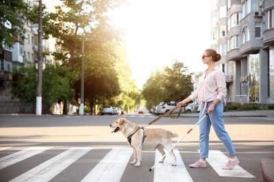 横断歩道を歩く女性と盲導犬