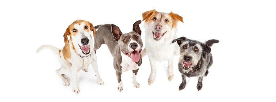 4匹の笑顔の犬