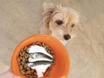 ご飯の容器を見ようとしない犬