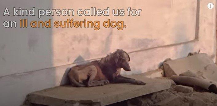 病気で苦しむ犬