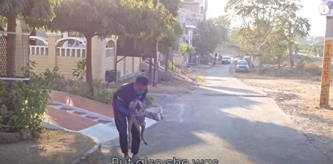 犬を保護します