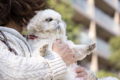 直立姿勢で抱っこされる犬