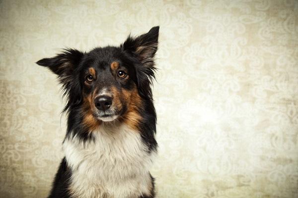 正面を向いている迷い犬