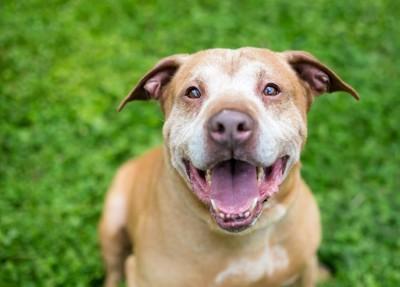 笑顔でこちらを見上げるシニア犬