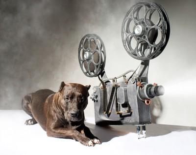 映画と犬2