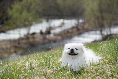芝生の上に座り込む犬