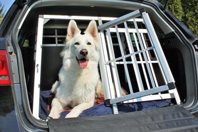 車に置かれた扉の開いたケージと白い犬