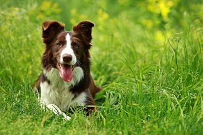 草むらで伏せをする犬