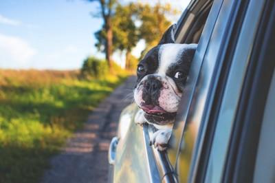 窓から顔出し犬