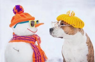 雪だるまを見つめる眼鏡をかけた犬