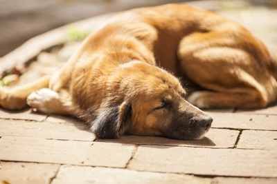 丸くなって寝る犬