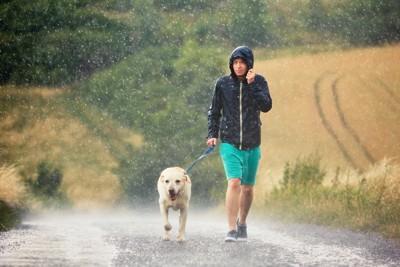 雨の中散歩中の犬と男性