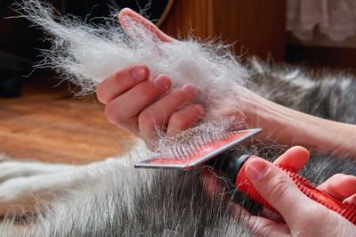 犬の抜け毛を持つ人の手