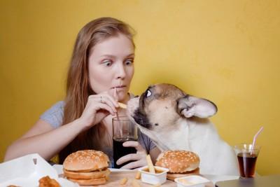 ポテトフライを食べる犬