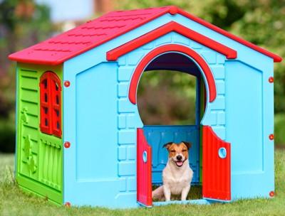 野外の犬小屋の中の犬