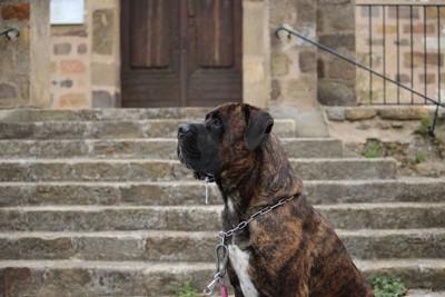 ヨダレを垂らす犬の横顔