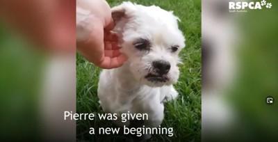 白い小型犬のアップ