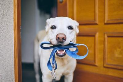リードをくわえて持ってくる犬