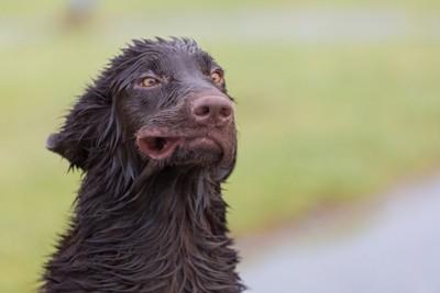 風に吹かれる濡れた黒い犬