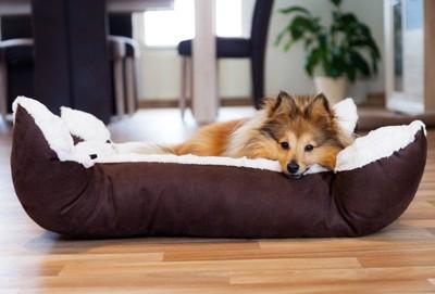 犬用ベッドで犬が眠る
