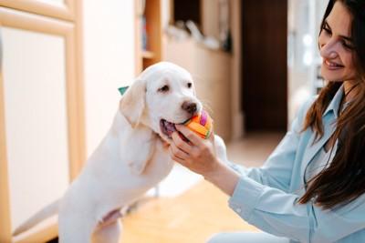 女性とおもちゃで遊ぶ子犬