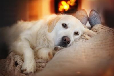 暖房器具の前で横になった飼い主の足に顔を乗せる犬