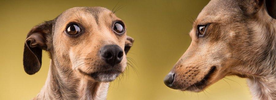 犬のポートレート2種