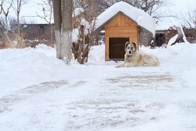 雪の中で外飼いされている犬