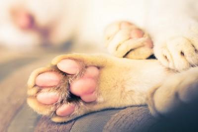 横たわる犬の足の肉球アップ