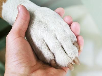 犬の足と人の手