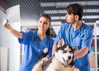 犬のレントゲンを見ている獣医師達
