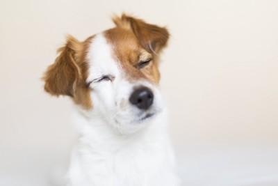 目を閉じる犬の顔のアップ