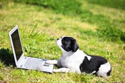 草原でパソコンを開く犬