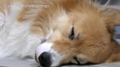 眠るワンちゃん