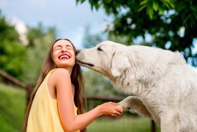 女性の横顔にキスをする白い大型犬