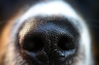 犬の鼻のアップ