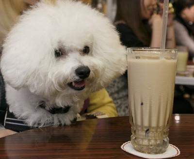 犬とカフェラテ