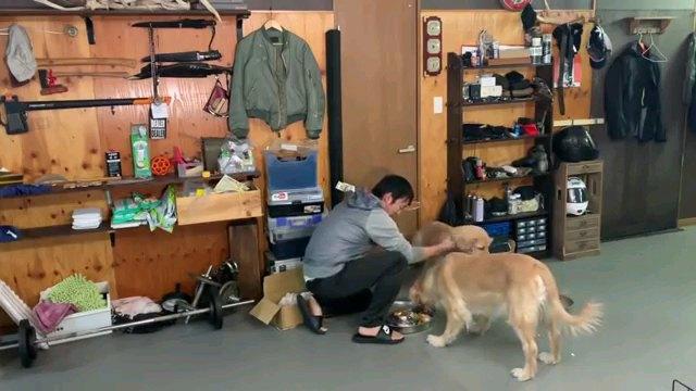 犬を撫でる人