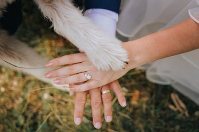 人と犬が手を重ね合わせているようす
