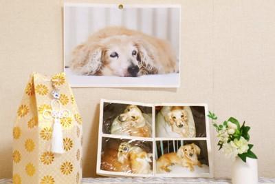 死亡した愛犬の遺骨と写真