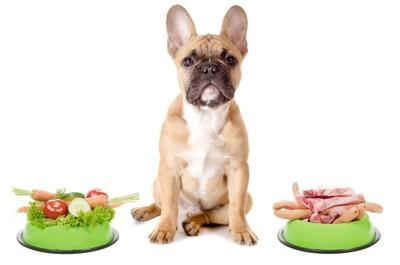 野菜と肉を前にする犬