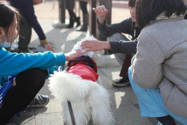 人とスキンシップをとる犬