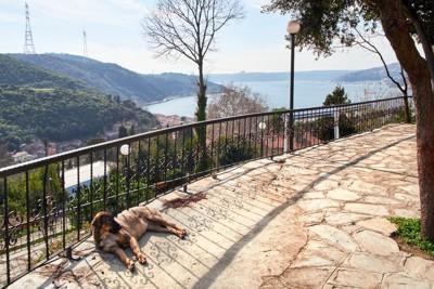 公園で寝ているトルコの野良犬