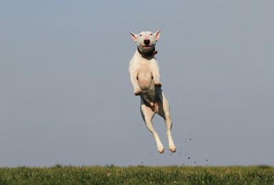飛んでいる犬