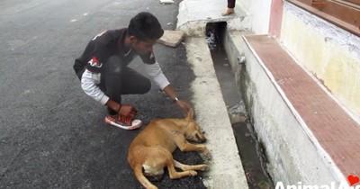 救助隊員と横たわる犬