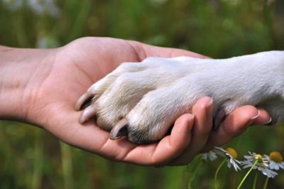 白い犬の手と人の手