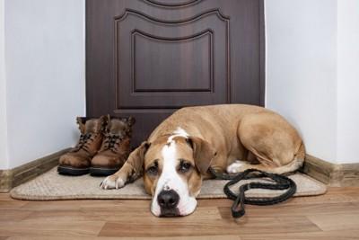 玄関マットと犬